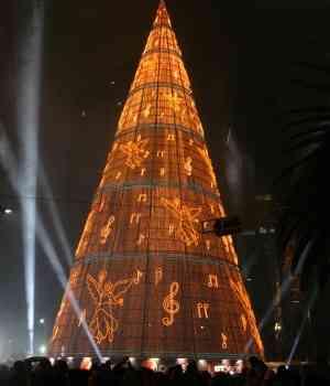 Mexico City tree